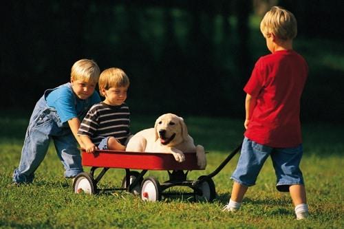 Cani e bambini le razze pi adatte for Piani domestici accessibili ai disabili