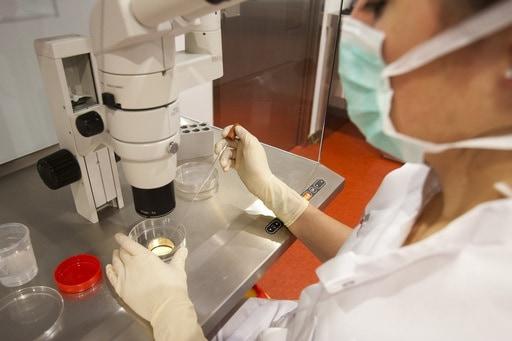 fecondazione-eterologa