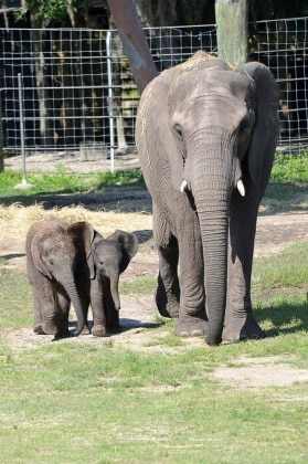 nome-elefante-5