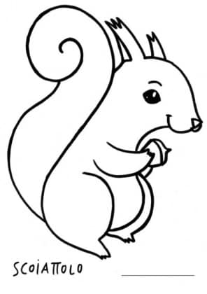 scoiattolo.jpg