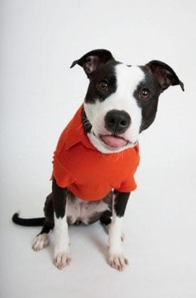 Mamma voglio un cucciolo - Portare il cane al canile ...