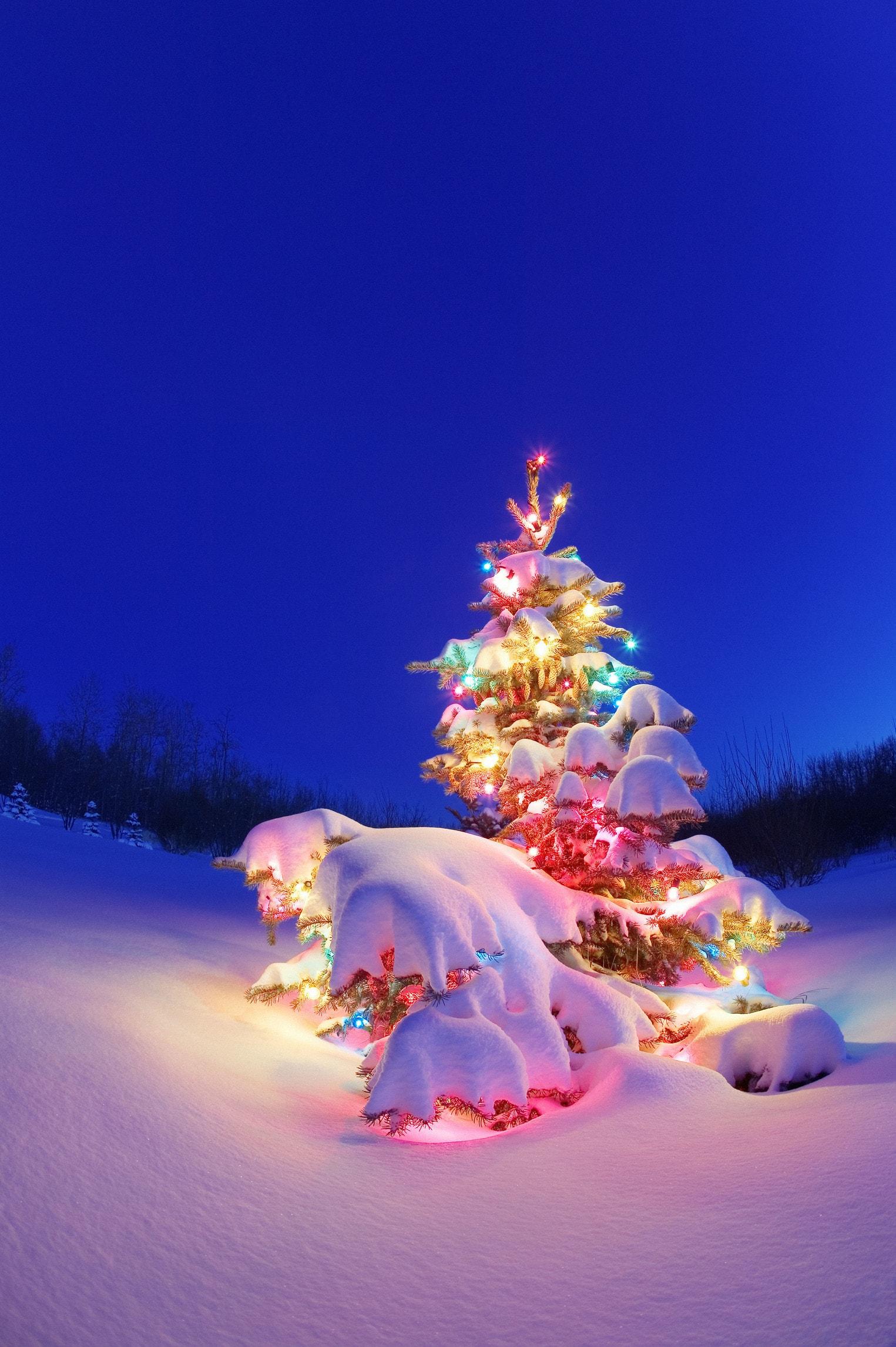 Eccezionale Perché a Natale si fa l'albero? - Nostrofiglio.it MT19