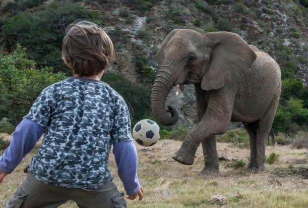 elefantebambino1