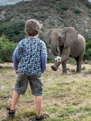 elefantebambino2
