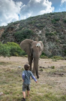 elefantebambino3