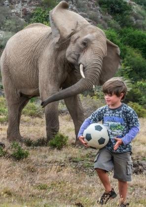 elefantebambino4