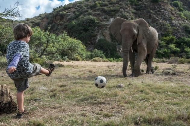 elefantebambino5
