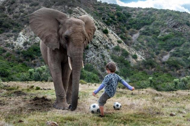 elefantebambino9
