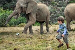 elefantebambino10.1500x1000
