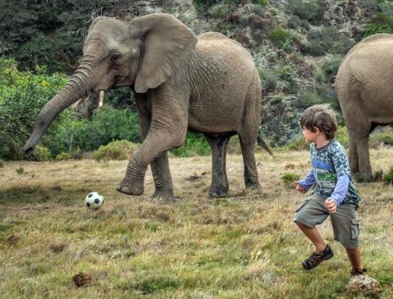 elefantebambino10