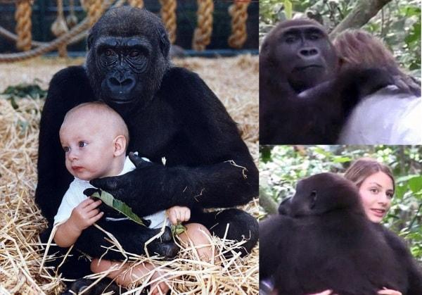 tansy_aspinall_con_sangh-gorilla-ragazza.600