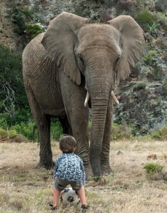 elefantebambino11