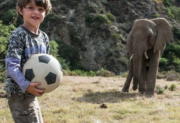 elefantebambino12