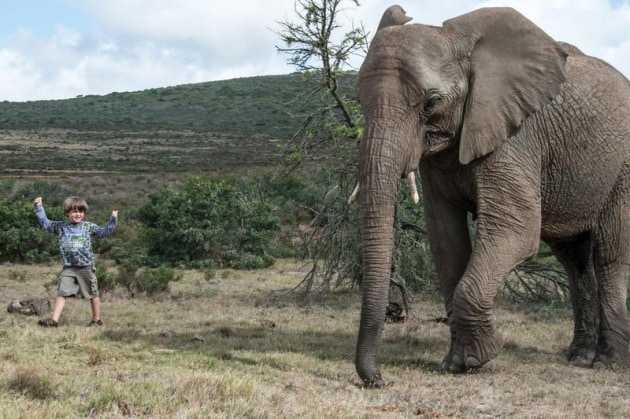 elefantebambino13