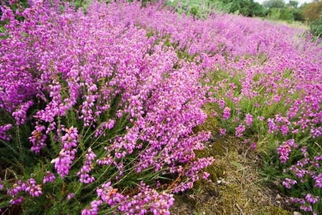 17 nomi per bambine ispirati ai fiori - Dalia pianta ...