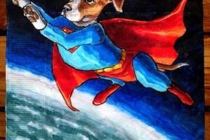 supermanbeagle