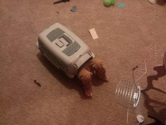 La logica dei bambini  18 foto di piccoli geni incompresi ... 1fc2a2d4611