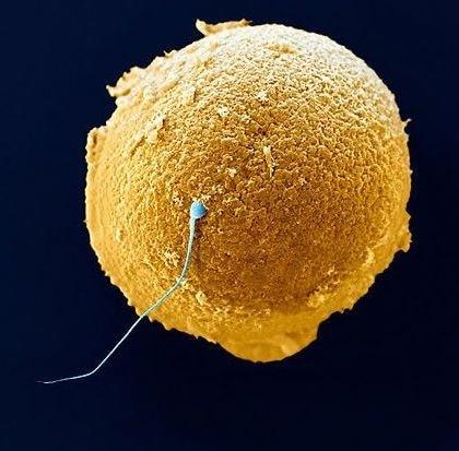 pap test primo mese di gravidanza