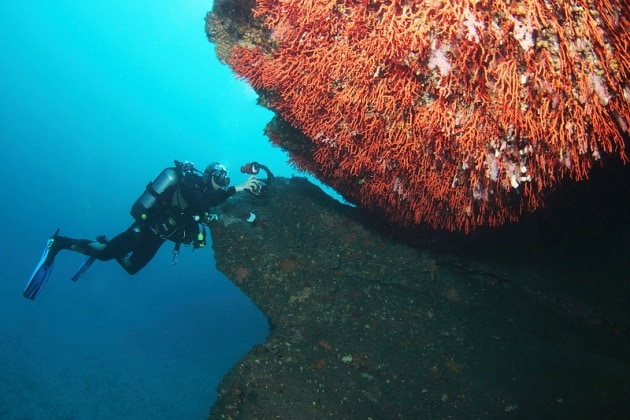 06_coralli
