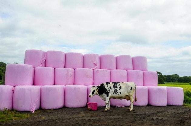 marshmallows_01