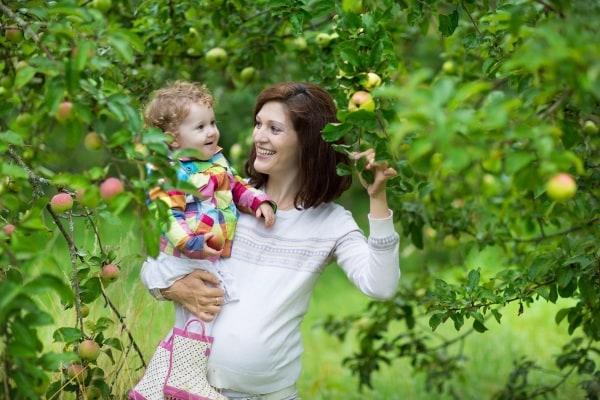 alimentazione gravidanza mela