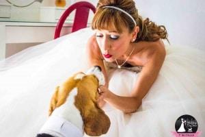 weddingdogsitter.600