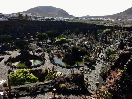 giardinocactus