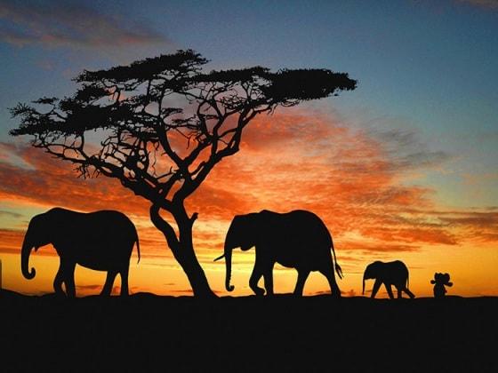 elefanteperso3