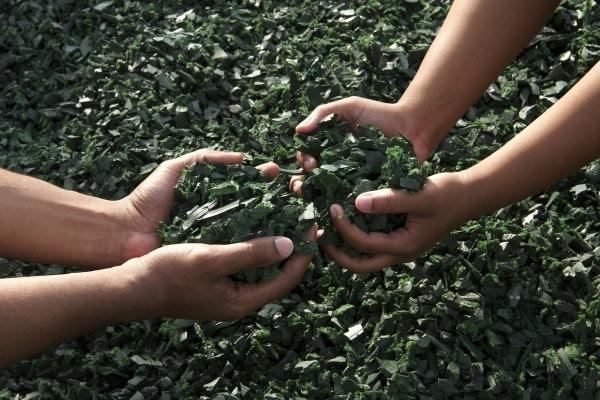 genitori green