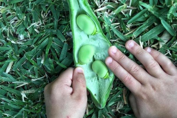 Buoni propositi culinari 1: come far mangiare più legumi ai bambini