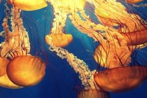 meduse.600