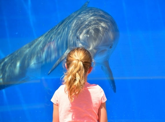 acquario-delfino-bambina