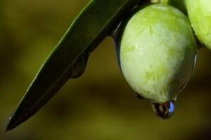 olive-2691587_640.600