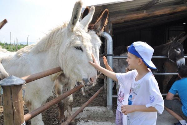 Puglia, 5 masserie didattiche da visitare con i bambini