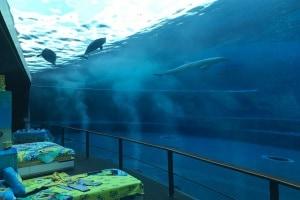 acquariogenova.600