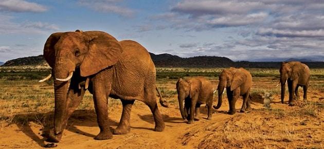 elefanteperso17