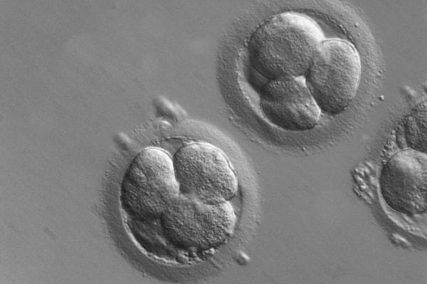 Diagnosi genetica preimpianto e screening genetico preimpianto: che cosa sono, quando farli