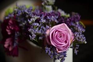 rose-1405552_1920.600