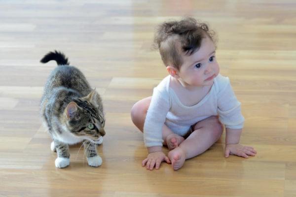 15 foto preziose di bambini insieme a gatti