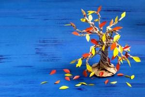 lavoretto albero autunno