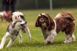 cuccioli-gioco-e1536841188779