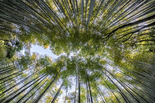 La foresta di bamboo - Kyoto