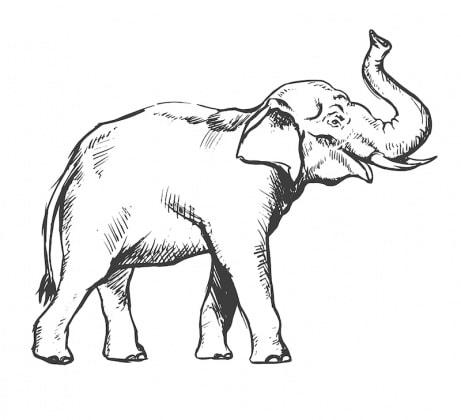 11elefante