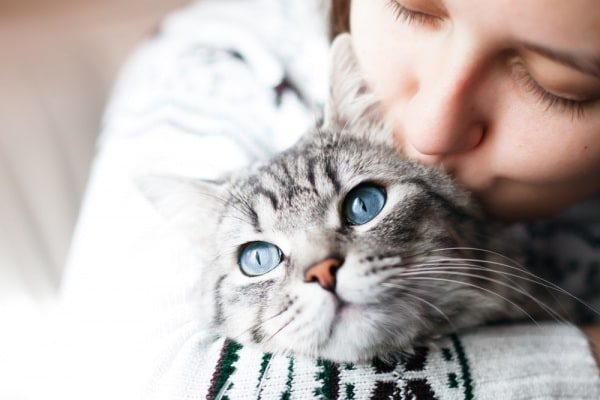 gatti.600