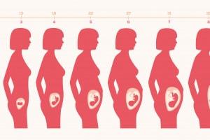 gravidanza.600