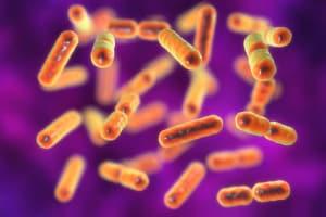 endometriosi_batteri_antibiotici