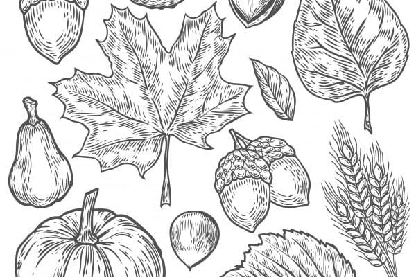 Disegni da colorare autunno