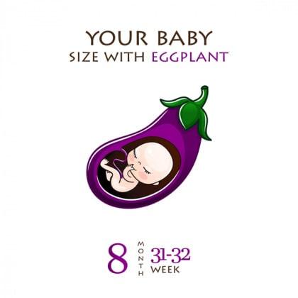 feto-14