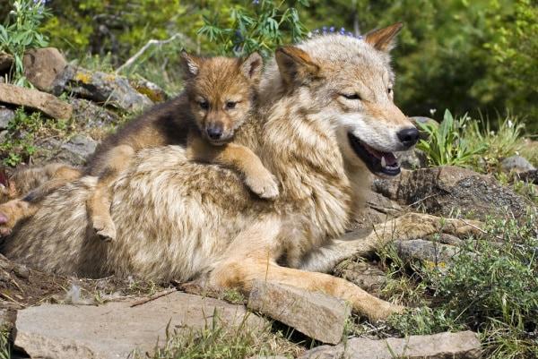 Cocchi di mamma: i cuccioli più teneri